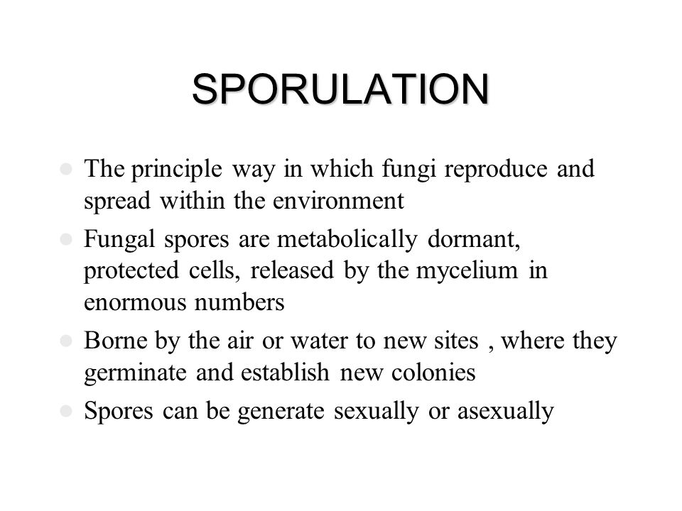 SPORULATION The principle way in which fungi reproduce and spread within the environment.