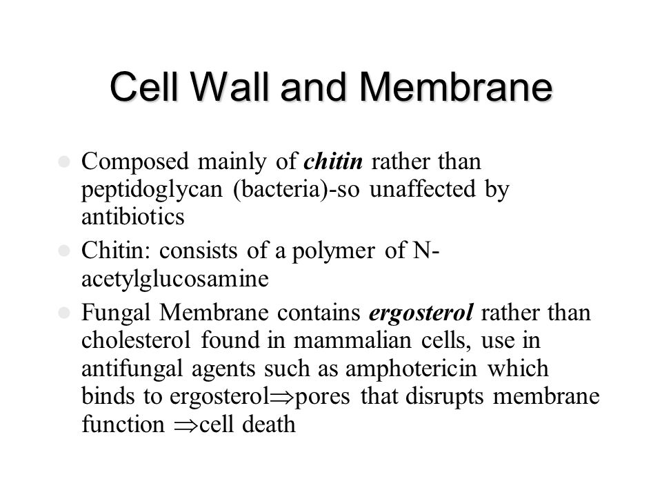 Cell Wall and Membrane Composed mainly of chitin rather than peptidoglycan (bacteria)-so unaffected by antibiotics.