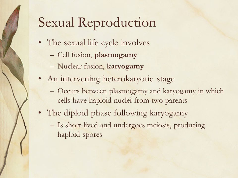 Sexual Reproduction The sexual life cycle involves