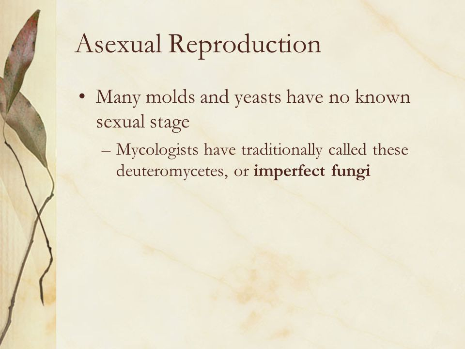 Asexual Reproduction Many molds and yeasts have no known sexual stage