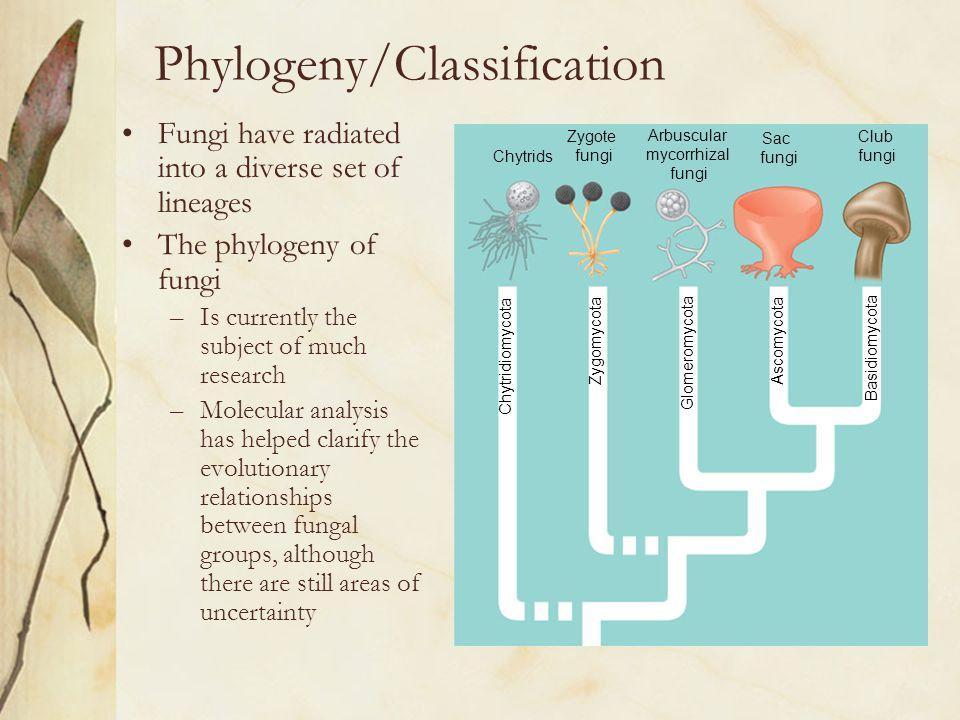 Phylogeny/Classification
