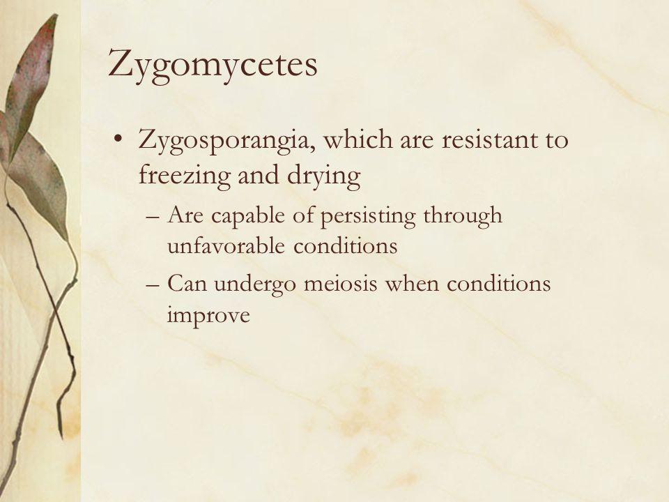 Zygomycetes Zygosporangia, which are resistant to freezing and drying