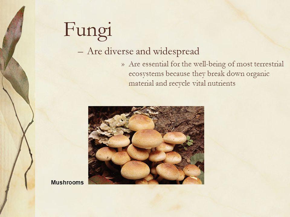 Fungi Are diverse and widespread