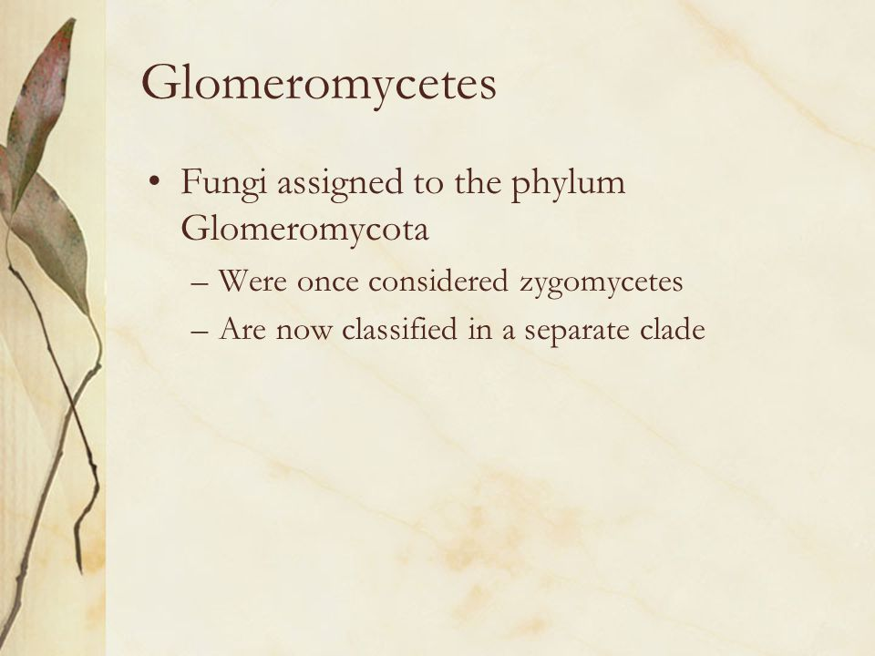 Glomeromycetes Fungi assigned to the phylum Glomeromycota