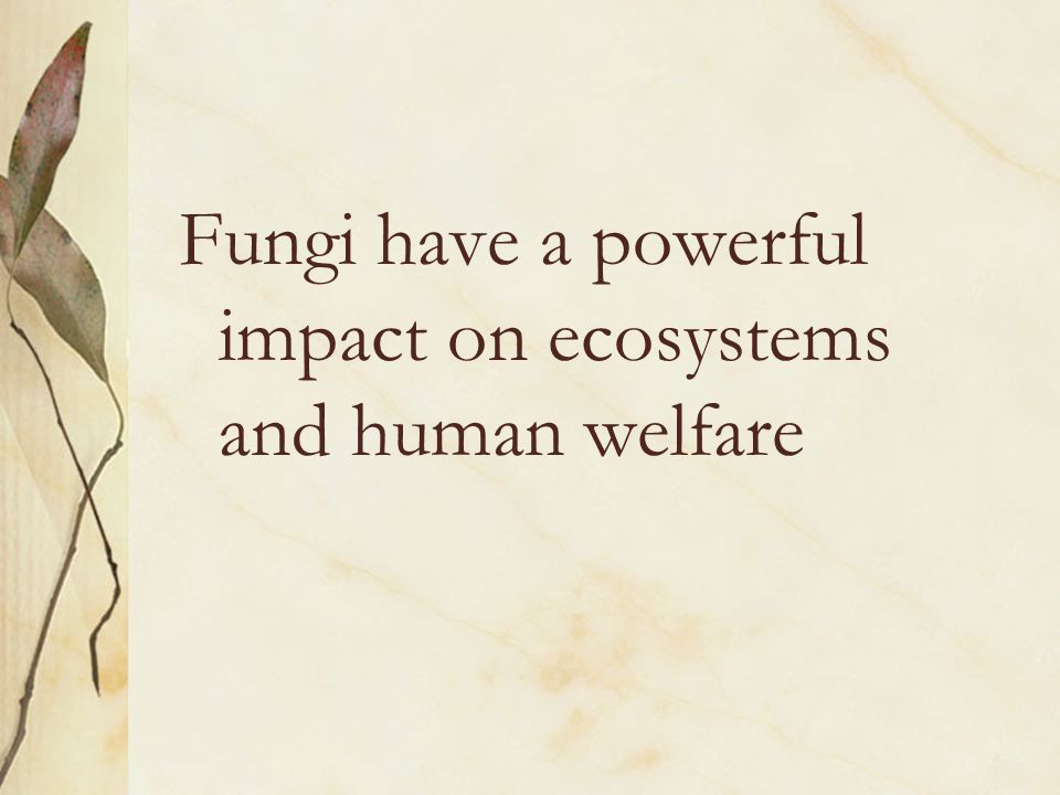 Fungi have a powerful impact on ecosystems and human welfare