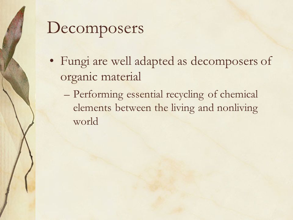 Decomposers Fungi are well adapted as decomposers of organic material