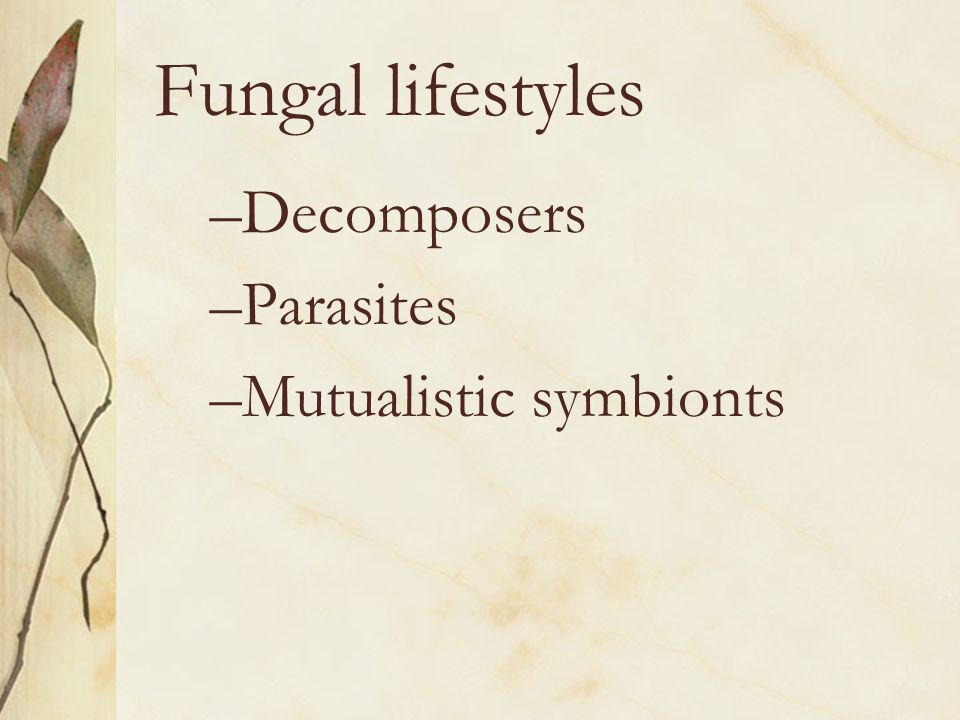 Fungal lifestyles Decomposers Parasites Mutualistic symbionts