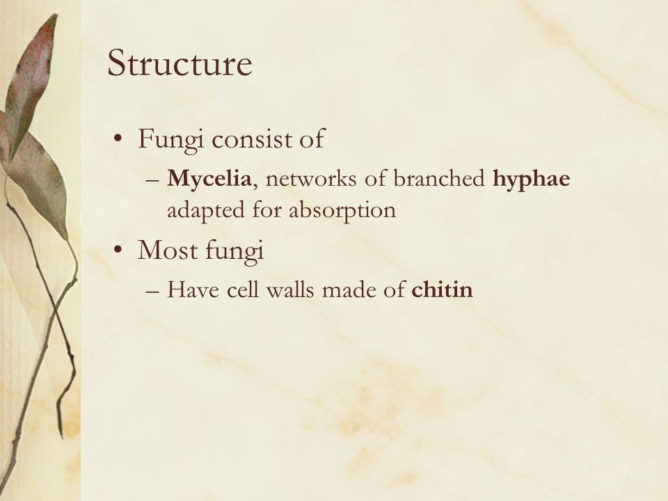 Structure Fungi consist of Most fungi