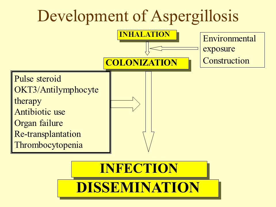 Development of Aspergillosis