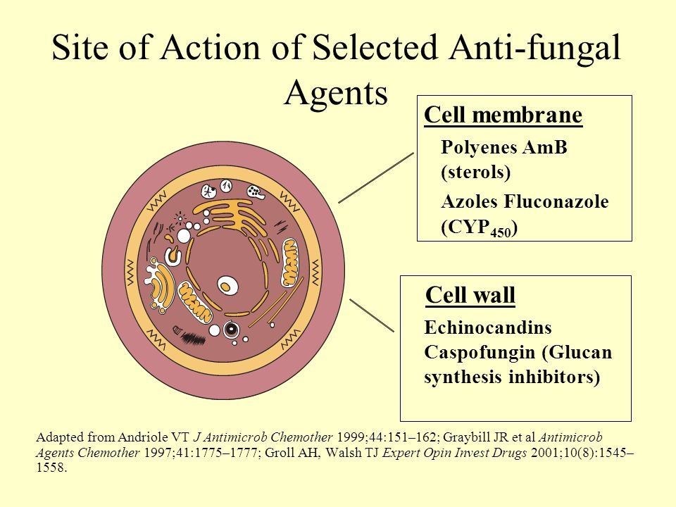 Site of Action of Selected Anti-fungal Agents