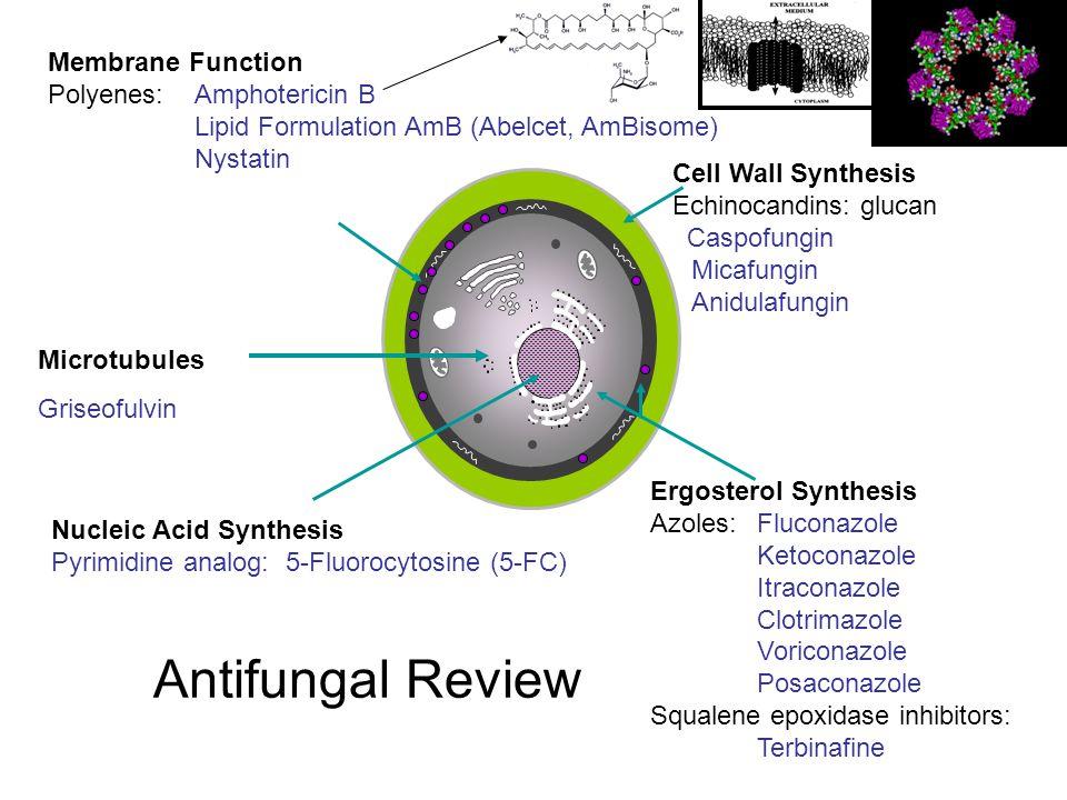Antifungal Review Membrane Function Polyenes: Amphotericin B