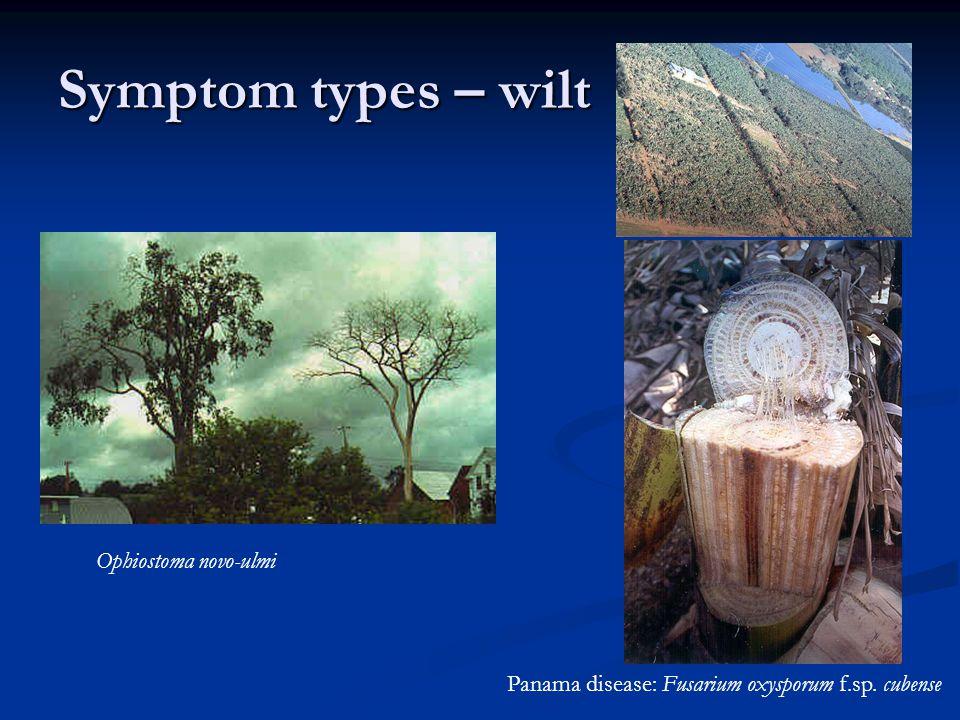 Symptom types – wilt Ophiostoma novo-ulmi
