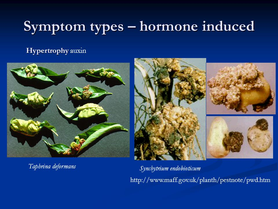 Symptom types – hormone induced