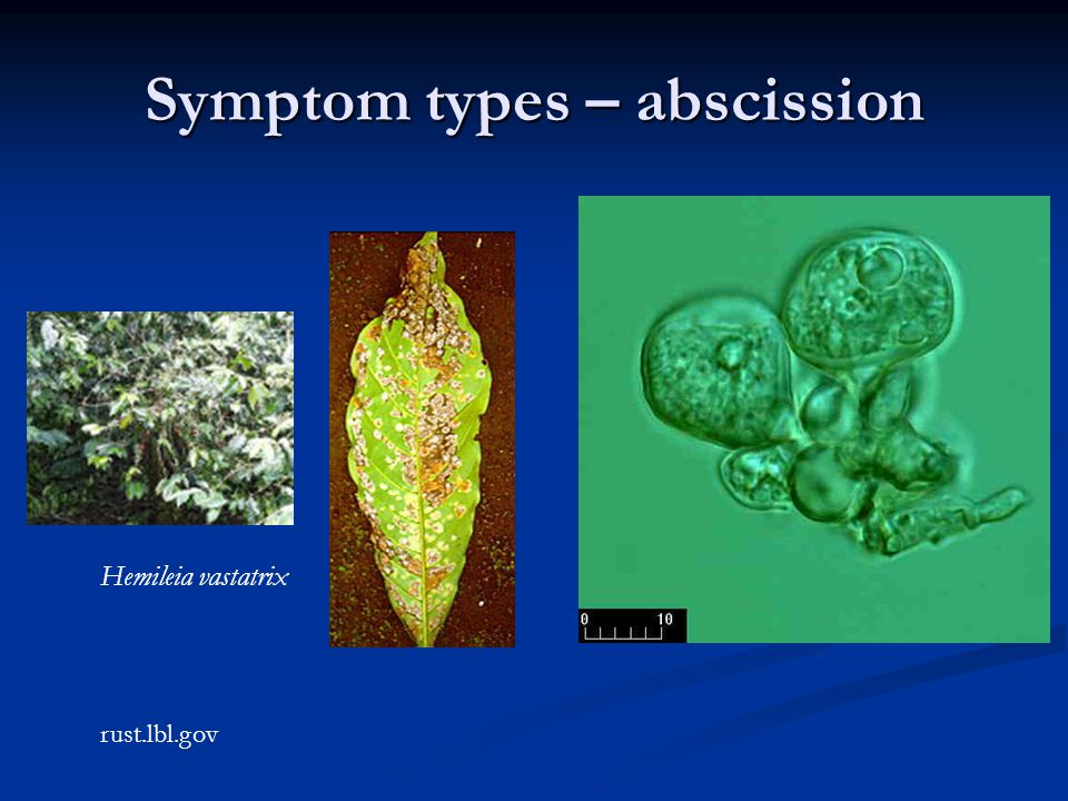 Symptom types – abscission