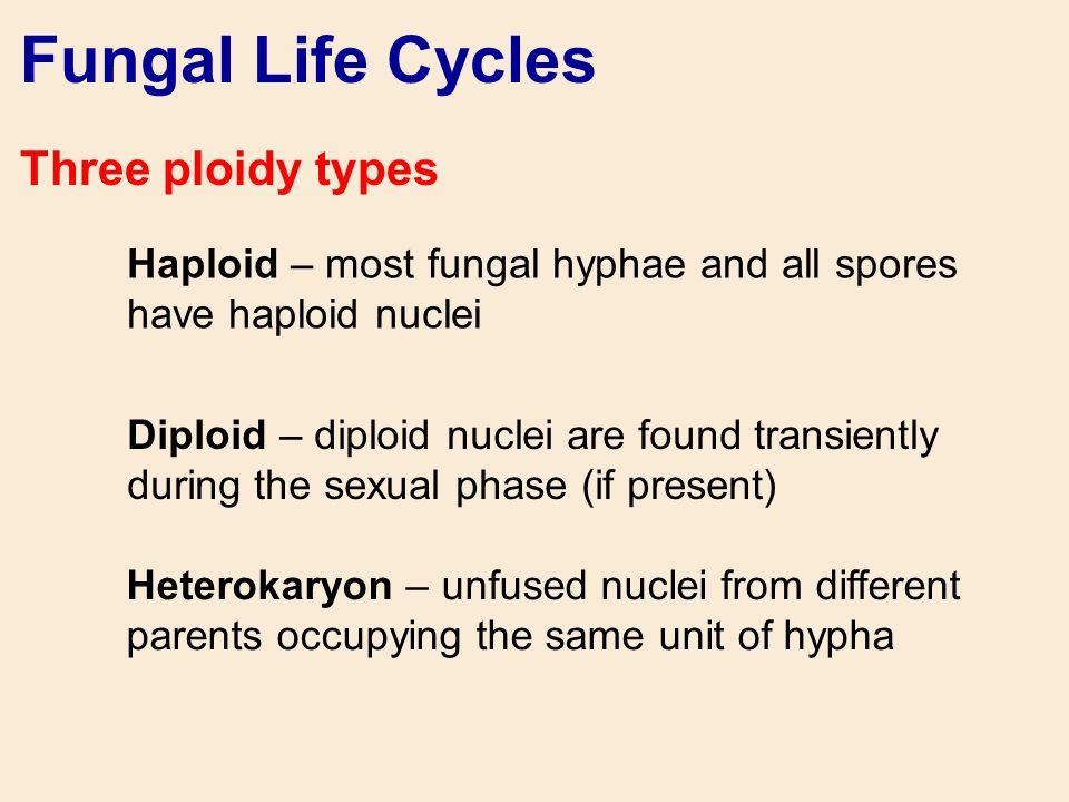 Fungal Life Cycles Three ploidy types