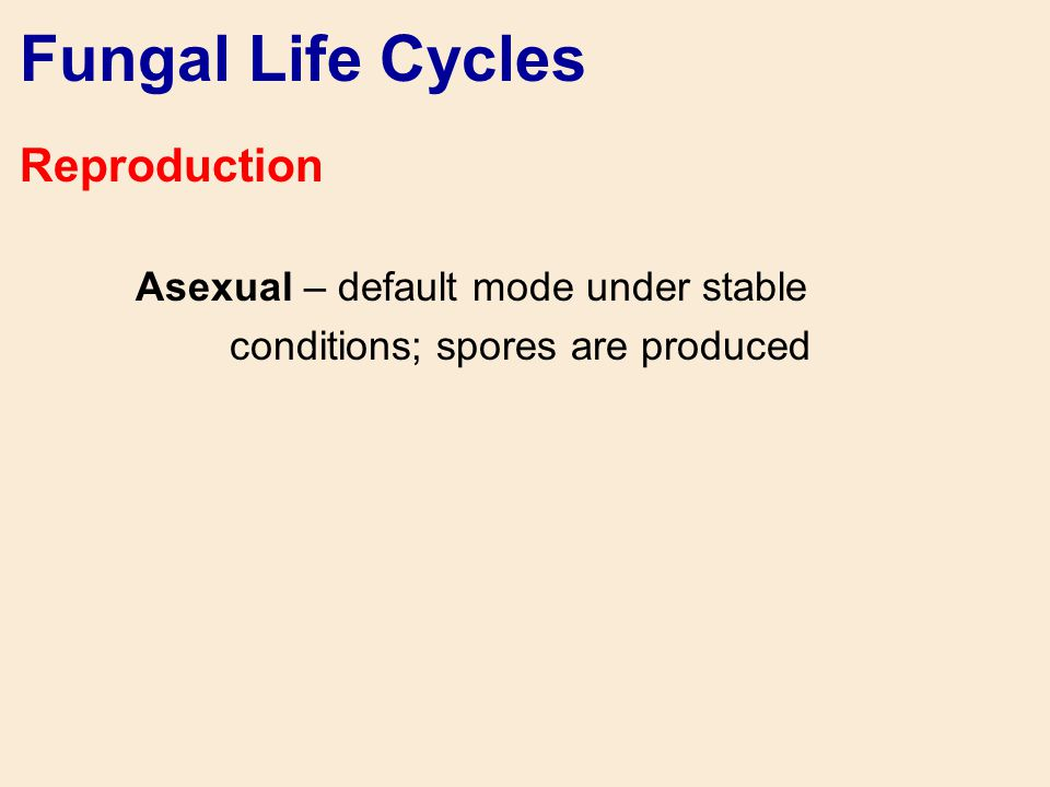 Fungal Life Cycles Reproduction Asexual – default mode under stable