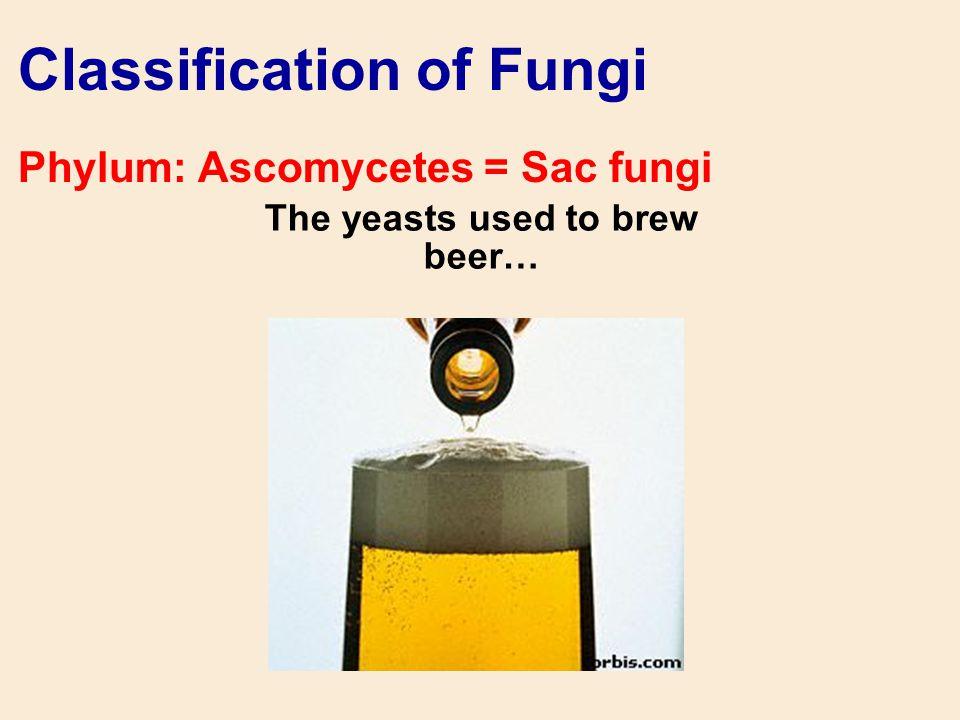 Classification of Fungi