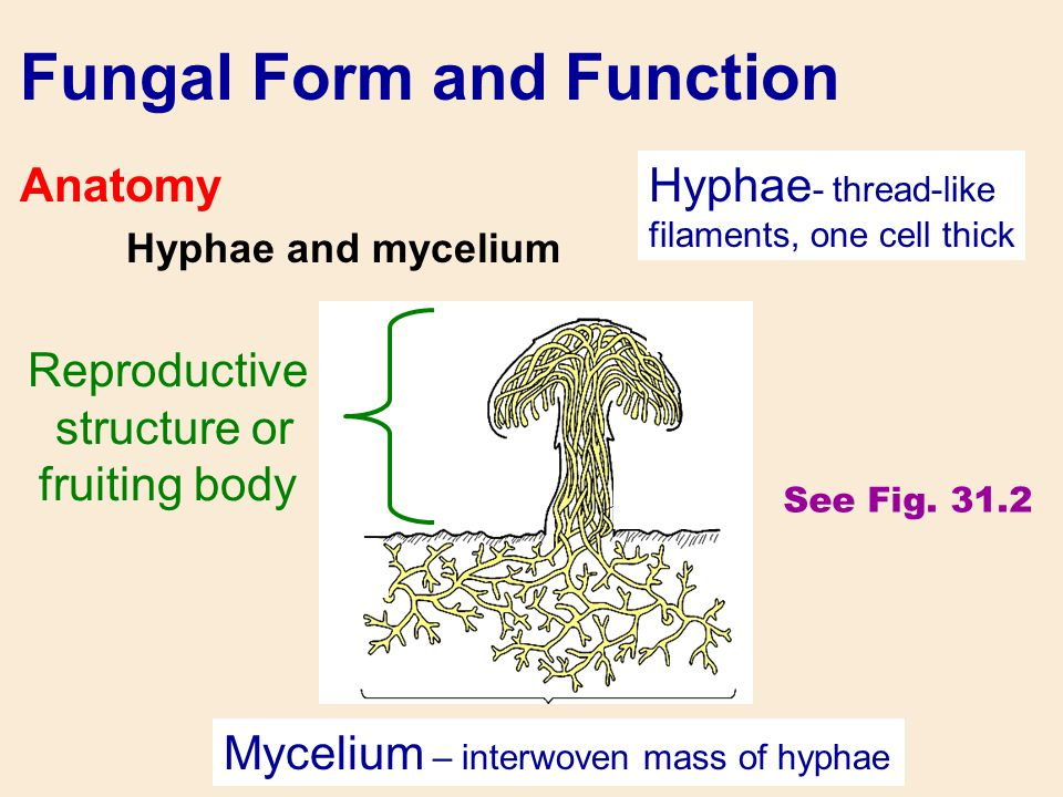 Fungal Form and Function
