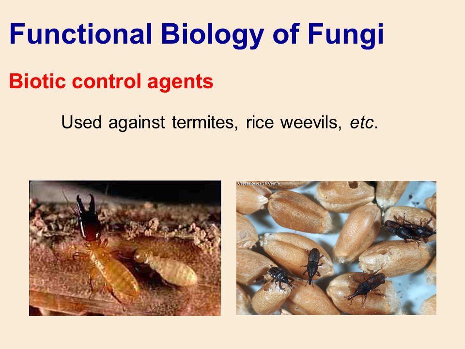 Functional Biology of Fungi