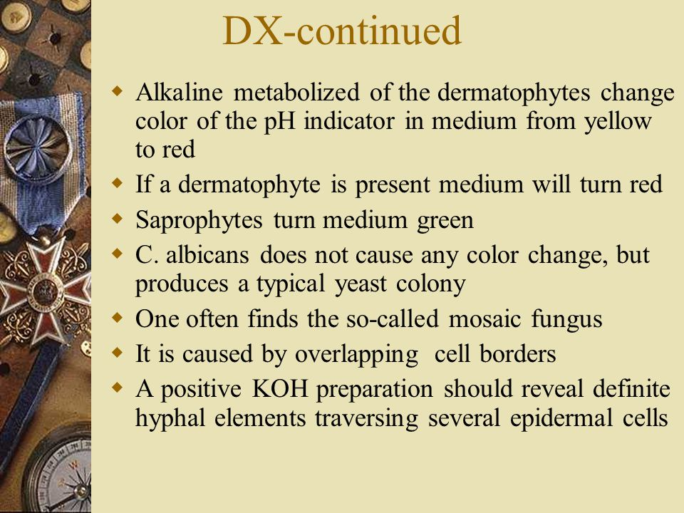 DX-continued Alkaline metabolized of the dermatophytes change color of the pH indicator in medium from yellow to red.