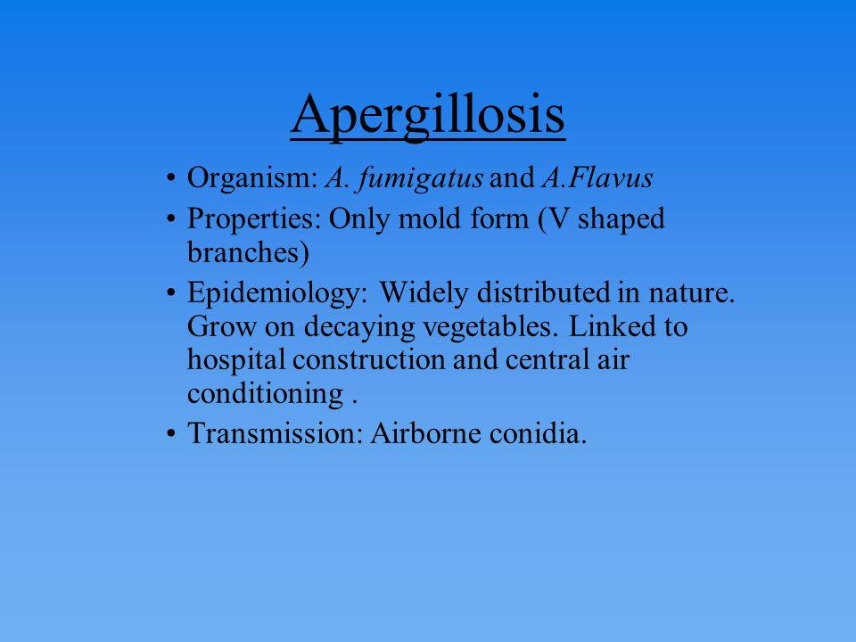 Apergillosis Organism: A. fumigatus and A.Flavus