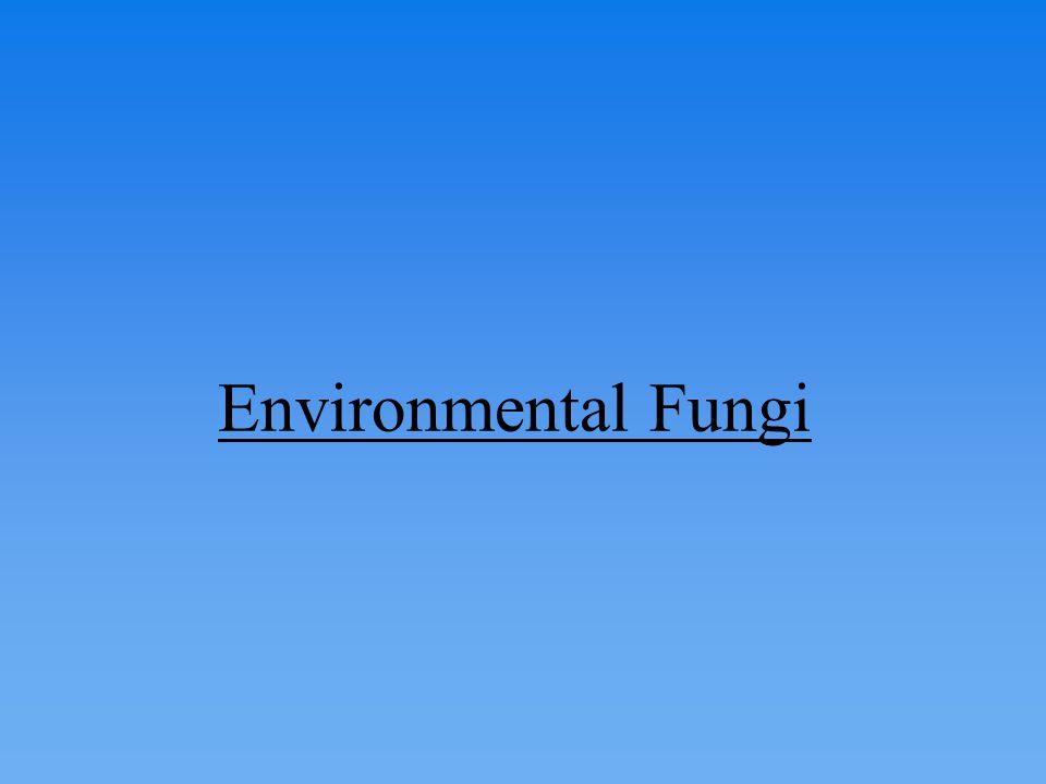 Environmental Fungi