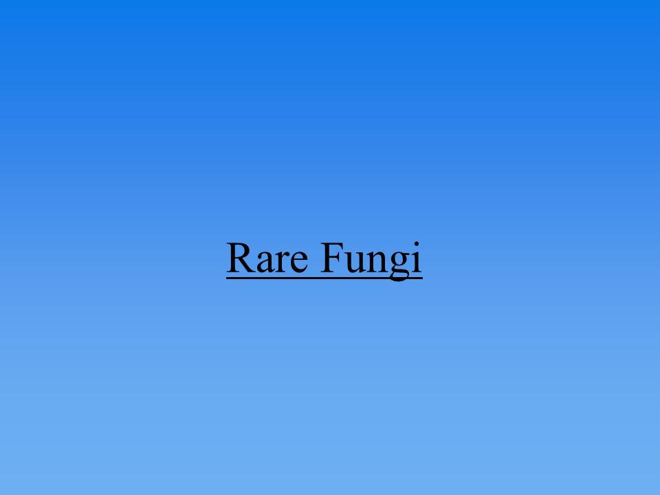 Rare Fungi