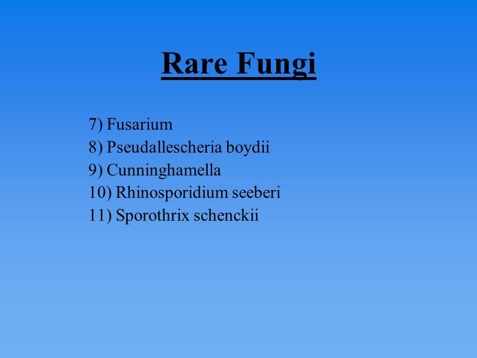 Rare Fungi 7) Fusarium 8) Pseudallescheria boydii 9) Cunninghamella