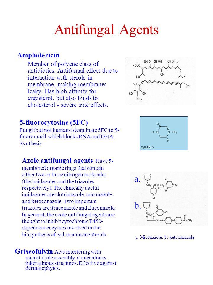 Antifungal Agents a. b. Amphotericin 5-fluorocytosine (5FC)