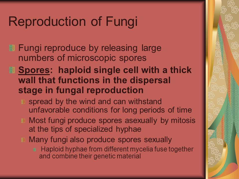 Reproduction of Fungi Fungi reproduce by releasing large numbers of microscopic spores.
