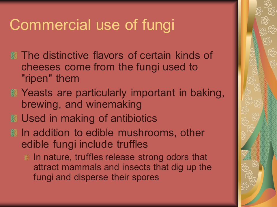 Commercial use of fungi