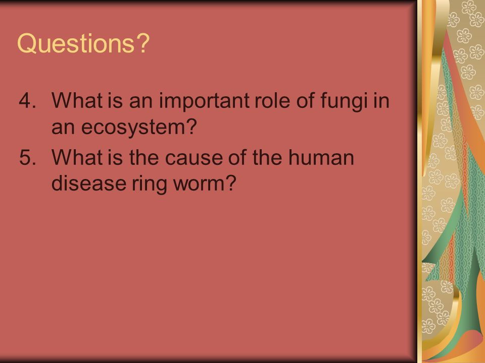 Questions What is an important role of fungi in an ecosystem