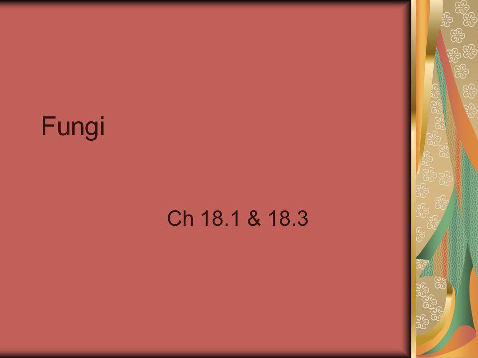 Fungi Ch 18.1 & 18.3