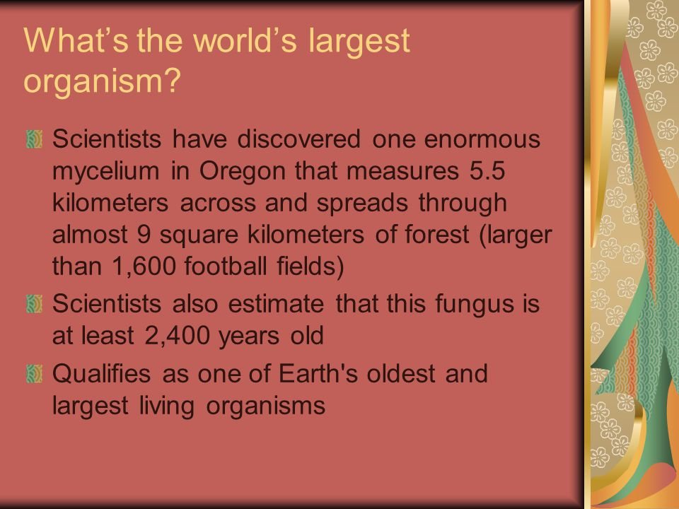 What's the world's largest organism
