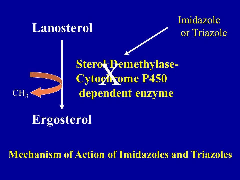 X Lanosterol Ergosterol Sterol Demethylase- Cytochrome P450