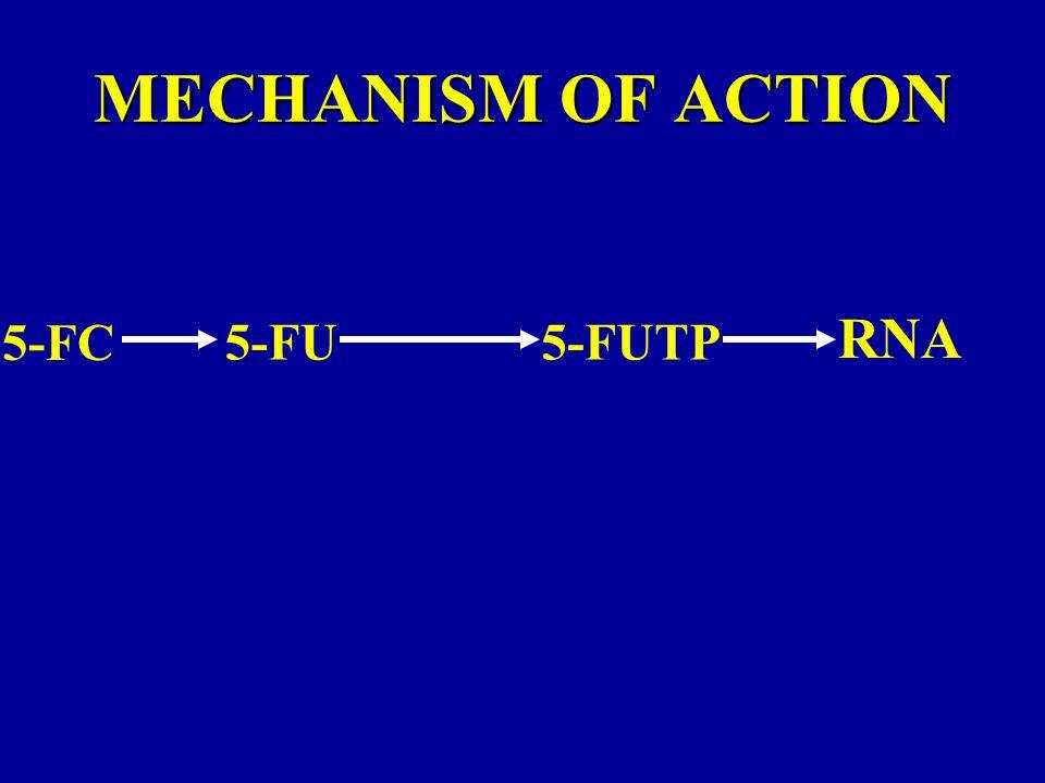 MECHANISM OF ACTION RNA 5-FC 5-FU 5-FUTP