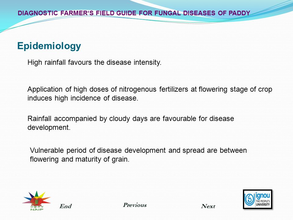 Epidemiology High rainfall favours the disease intensity.