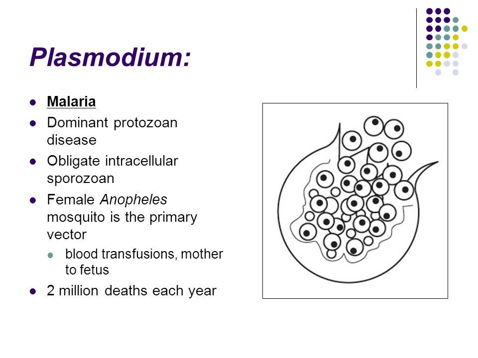 Plasmodium: Malaria Dominant protozoan disease
