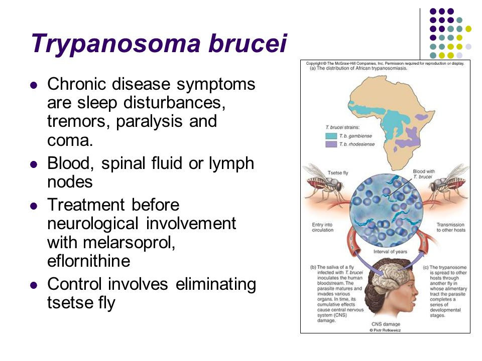 Trypanosoma brucei Chronic disease symptoms are sleep disturbances, tremors, paralysis and coma. Blood, spinal fluid or lymph nodes.