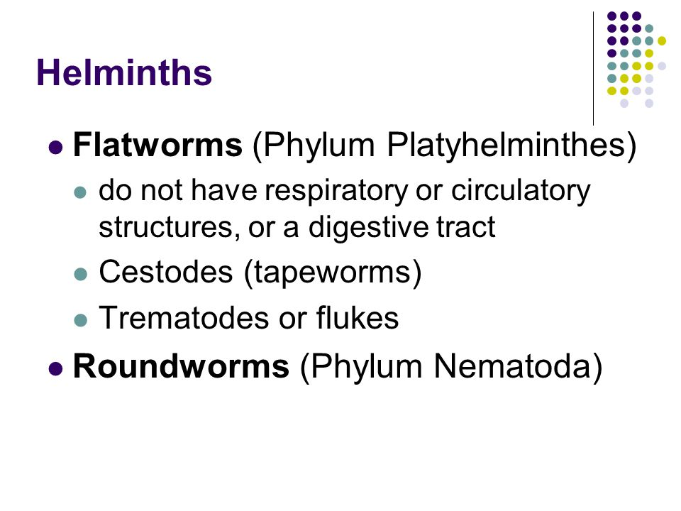 Helminths Flatworms (Phylum Platyhelminthes)
