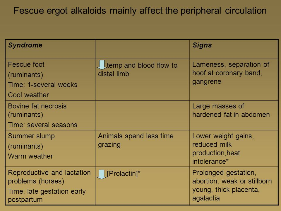 Fescue ergot alkaloids mainly affect the peripheral circulation