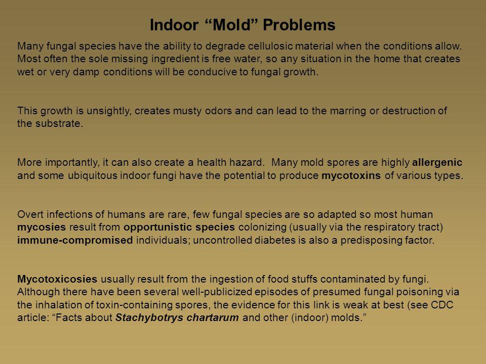 Indoor Mold Problems