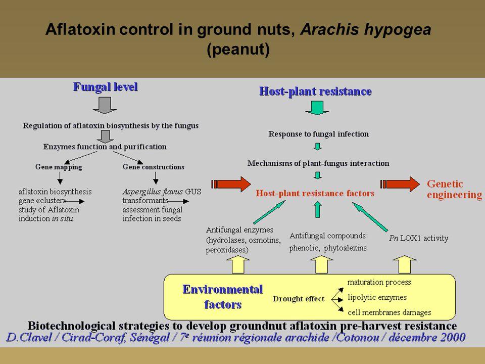 Aflatoxin control in ground nuts, Arachis hypogea (peanut)