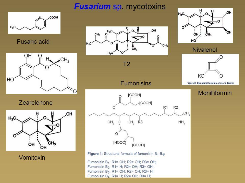 Fusarium sp. mycotoxins