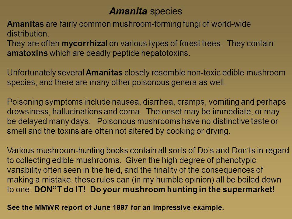 Amanita species Amanitas are fairly common mushroom-forming fungi of world-wide distribution.