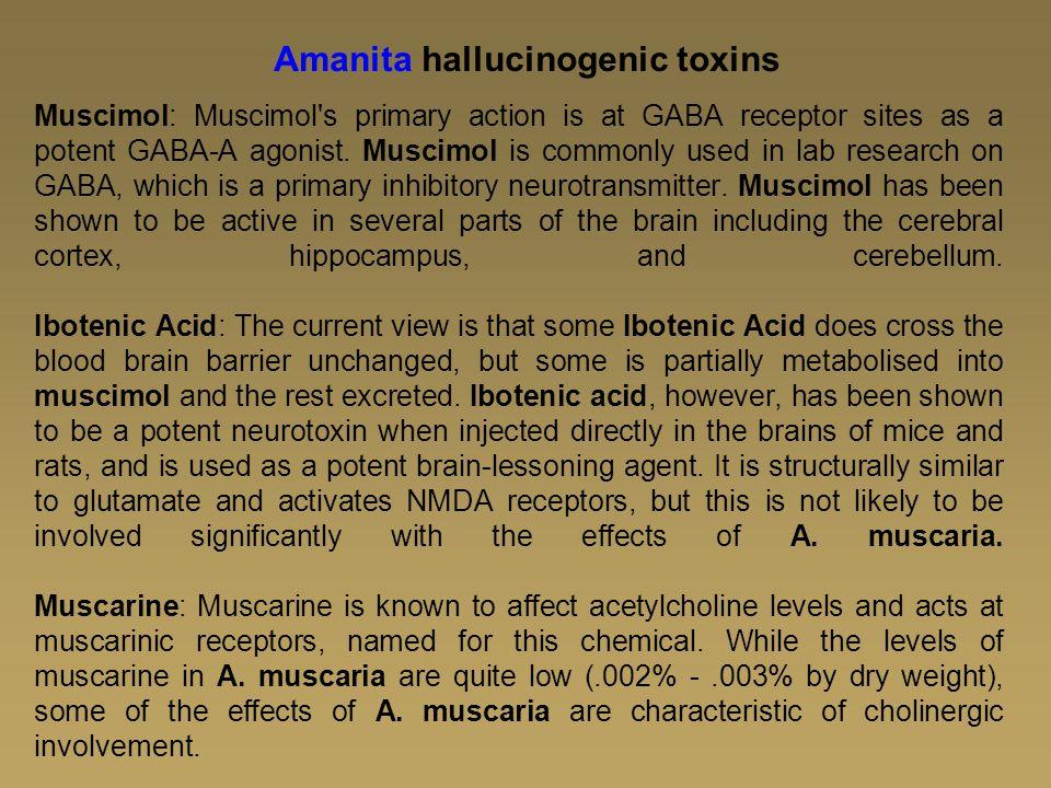 Amanita hallucinogenic toxins
