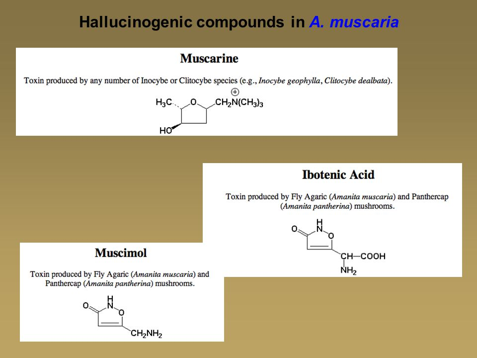 Hallucinogenic compounds in A. muscaria