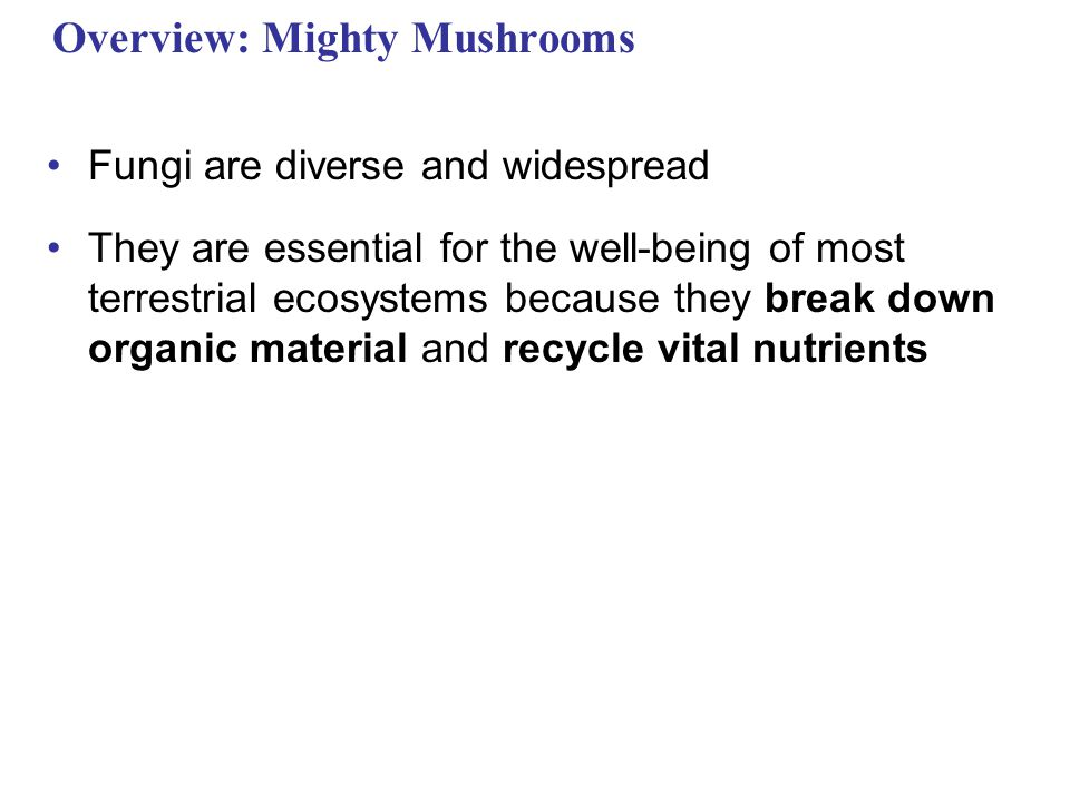 Overview: Mighty Mushrooms