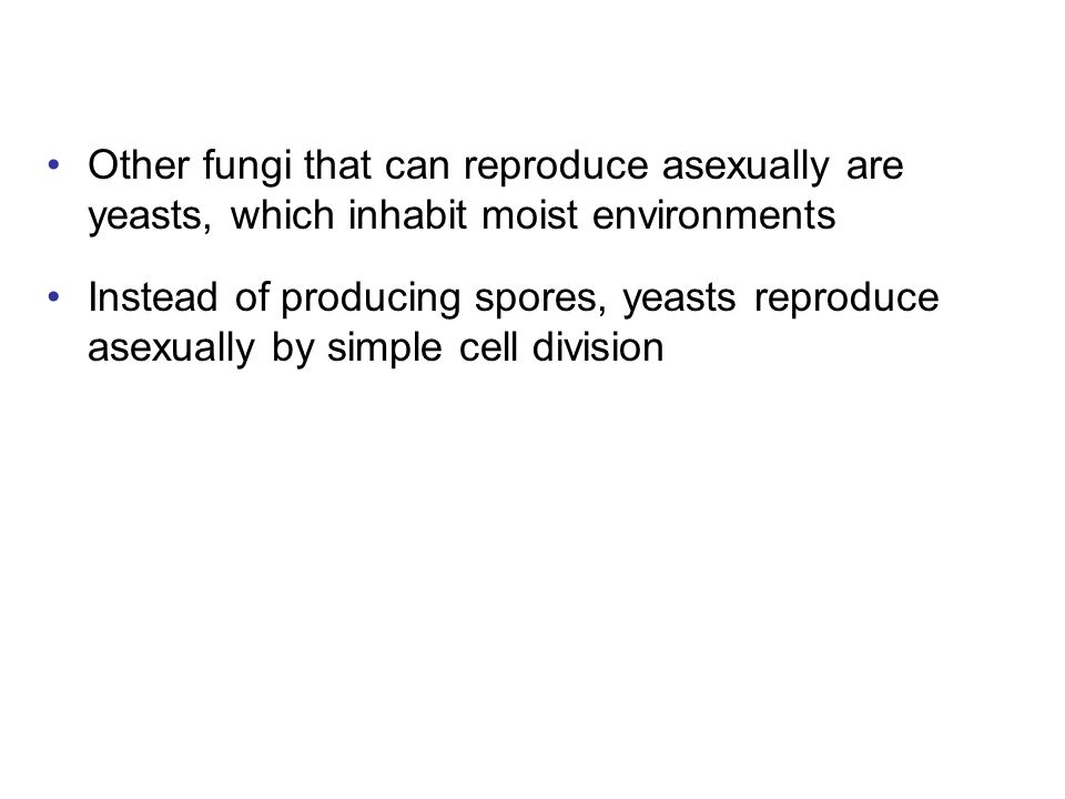 Other fungi that can reproduce asexually are yeasts, which inhabit moist environments