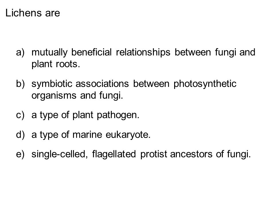 Lichens are mutually beneficial relationships between fungi and plant roots. symbiotic associations between photosynthetic organisms and fungi.